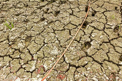 Cracked wet mud. Stock Images