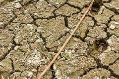 Cracked wet mud. Stock Photos