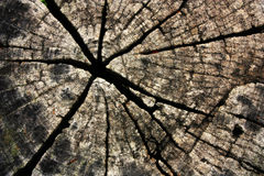 Cracked of wood Stock Images