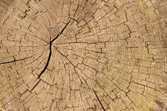 Cracked wood Royalty Free Stock Photography