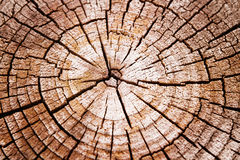 Cracked wood background Royalty Free Stock Images