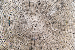 Cracked wooden log stock photography