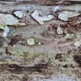 Cracked wood board Royalty Free Stock Image