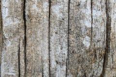 Cracked wood grain texture background Stock Photos