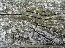 cracked Wood Stock Image