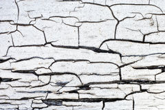 Cracked wood pattern Stock Image