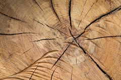 Cracked wood. A piece of wood cracked by age Stock Photo