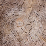 Cracked wood texture Stock Photos