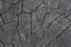 Cracked wood Royalty Free Stock Image