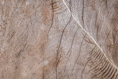 Cracked wood texture Stock Images