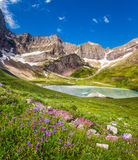 Cracker Lake and wild lilies in Glacier national park, Montana Stock Photography