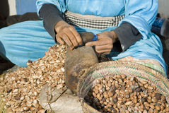 Cracking argan nuts Stock Images