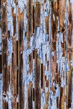 Cracking blue paint texture peeling off the surface of wooden wall. Royalty Free Stock Photography