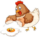 Cracking egg. Chicken cracking fresh egg on the floor Stock Photo