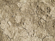 Cracking ground dried up Stock Photography