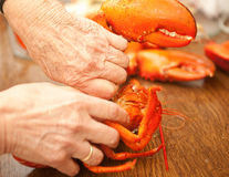 Cracking a lobster. Hands cracking and cutting a cooked lobster in a restaurant Stock Photo