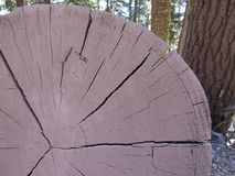Cracking log. A picture of a cracking log Royalty Free Stock Photos