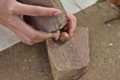 Cracking macadamia nuts. Woman is cracking macadamia nuts by nature wood hammer Royalty Free Stock Photo
