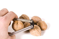 Cracking Walnuts Stock Photography
