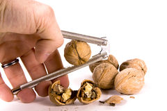 Cracking Walnuts Stock Photo