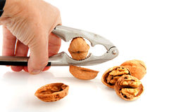 Cracking the whole walnut Royalty Free Stock Photo