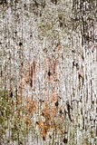 Crackled, peeling paint. Crackled, flaky peeling paint on an outside wall Stock Photography