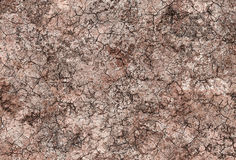 Crackled soil background Royalty Free Stock Photo