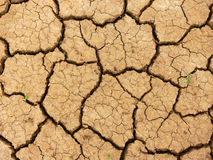 Cracks. Dry, drought sticken earth.  A dry creek bed Royalty Free Stock Images
