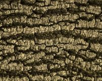 Cracks on the bark. With an interesting pattern Stock Images