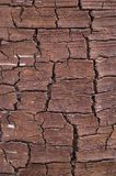 Cracks on the bark of a tree. Cracks on the brown birch bark depict the dryness and relief of the desert. For Backgrounds Royalty Free Stock Photos