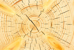 Cracks on the cut tree Stock Image
