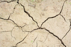 Cracks in the dried soil Royalty Free Stock Photo
