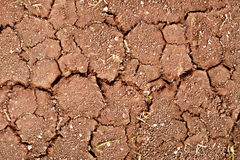 Cracks on dry ground Royalty Free Stock Image