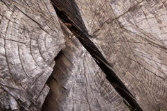 Cracks Due to Weathering on Tamboti Log Royalty Free Stock Image