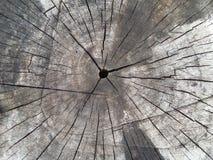 Cracks. Inside a tree royalty free stock photos