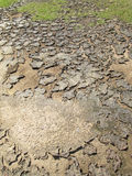 Cracks in the soil on the ground Stock Photography