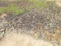 Cracks in the soil on the ground Royalty Free Stock Images