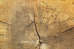 Cracks on spruce wood Stock Photos