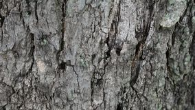 Cracks on the tree bark stock footage