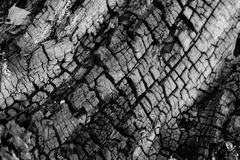 Cracks of a tree. Burned wood reveals scarring Stock Image