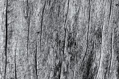 CRACKS ON THE TREE. Cracked tree trunk without bark Royalty Free Stock Photography