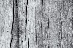 CRACKS ON THE TREE. Cracked tree trunk without bark Royalty Free Stock Photos