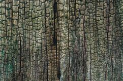 CRACKS ON THE TREE. Rustic tree trunk without bark Royalty Free Stock Photos