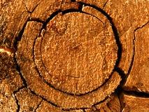 Cracks   tree   oak Royalty Free Stock Images