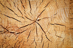 Cracks on a tree stump Royalty Free Stock Images