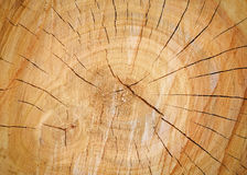Cracks on a tree stump Stock Photo