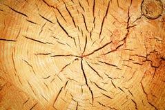 Cracks on a tree stump Royalty Free Stock Photo