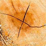 Cracks in the wood. Stock Images