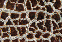 Cracky old brown textures Stock Image
