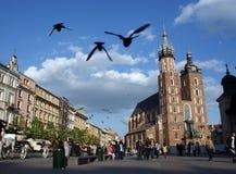 CRACOVIA: Vuelo de las palomas en cuadrado principal Foto de archivo libre de regalías